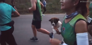 Corredora resgata cãozinho durante maratona 1