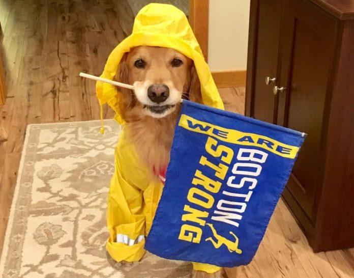 cachorro na maratona de boston 2
