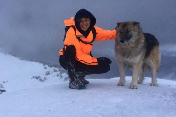 Cachorra morre após proteger corredora de ataque de urso